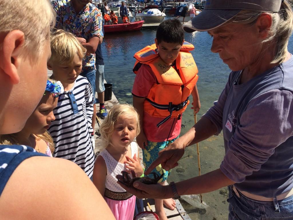 Krabbejagt Samsø