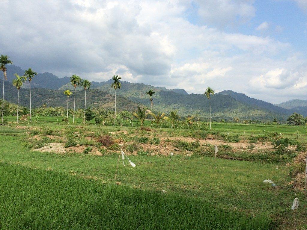 Balis landskab