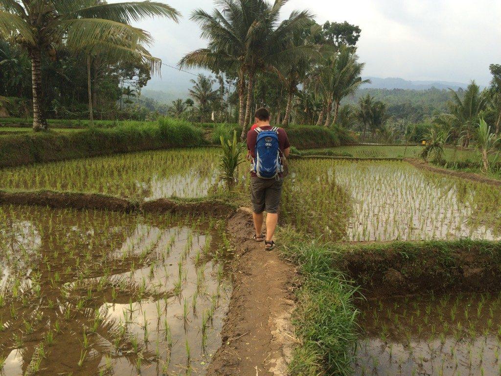 Rismarker på Lombok