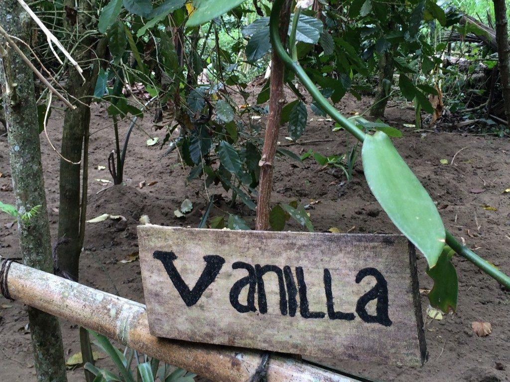 Kaffe på Bali