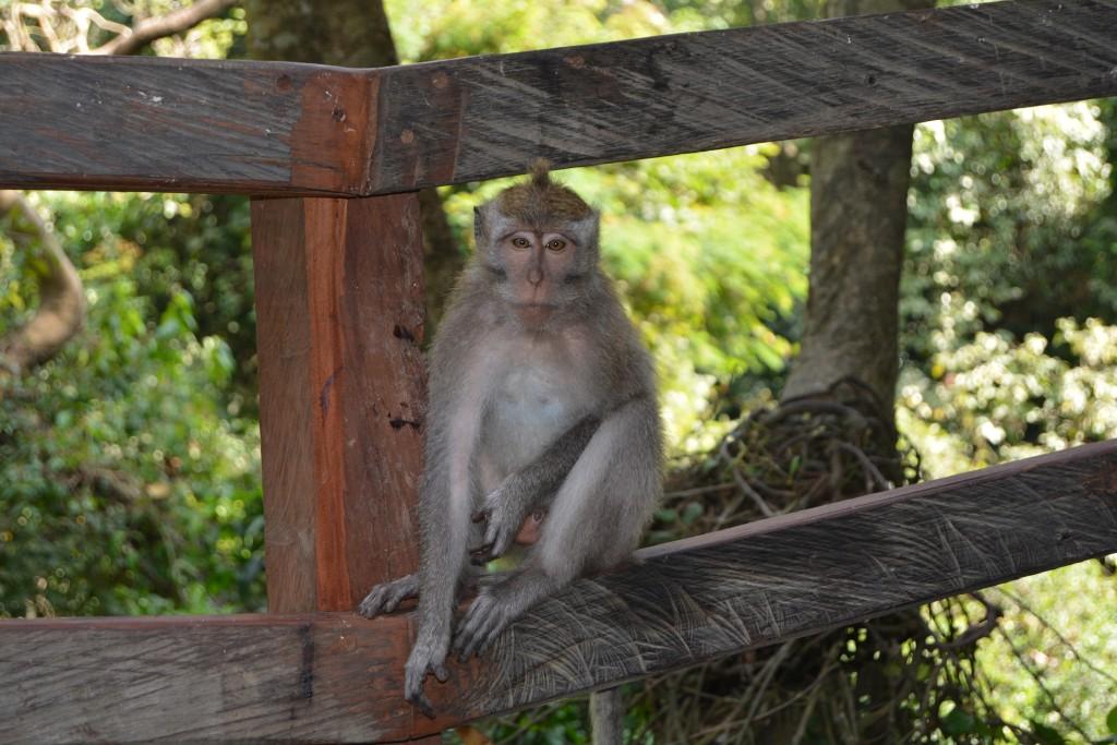Abe Bali