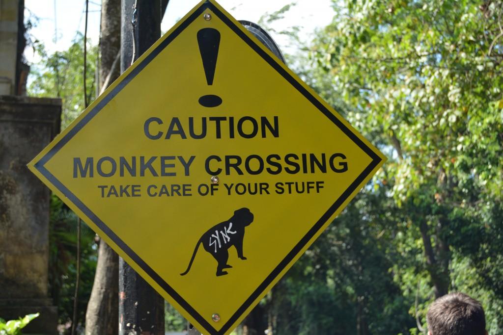 Monkey forrest Bali