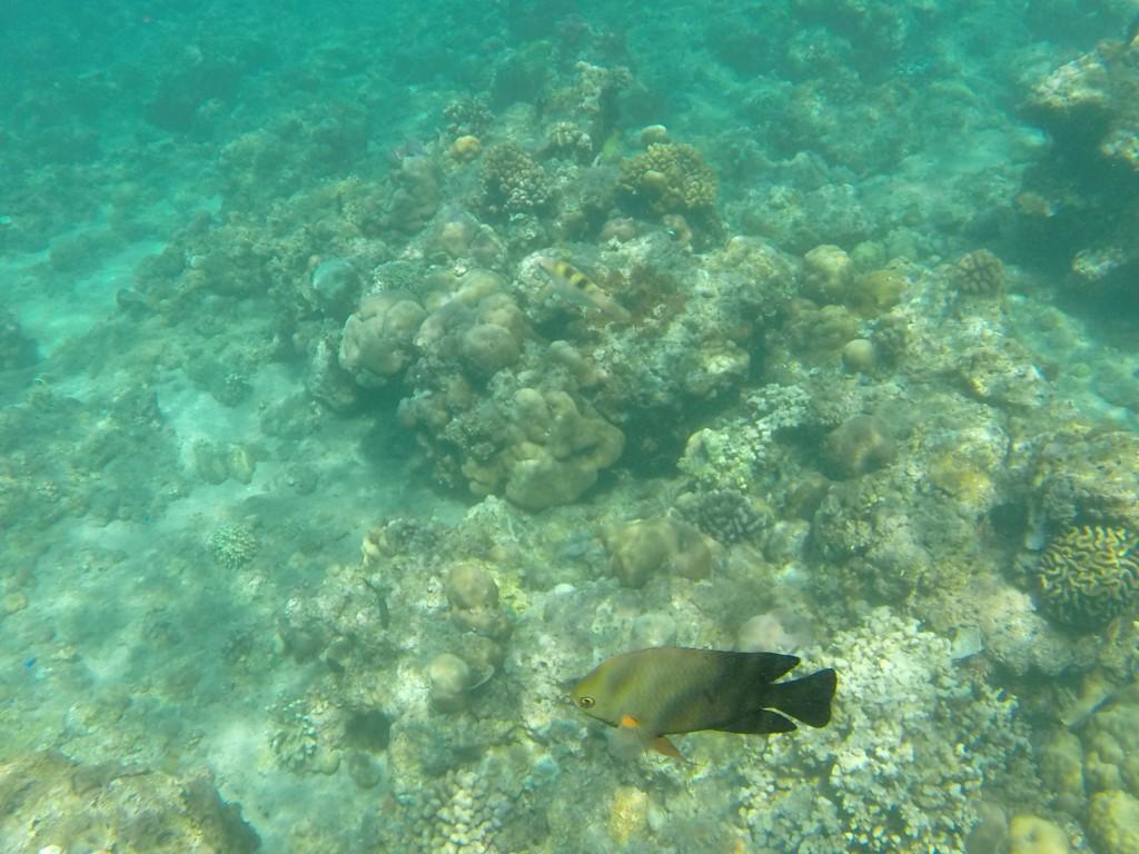 Snorkling Bali