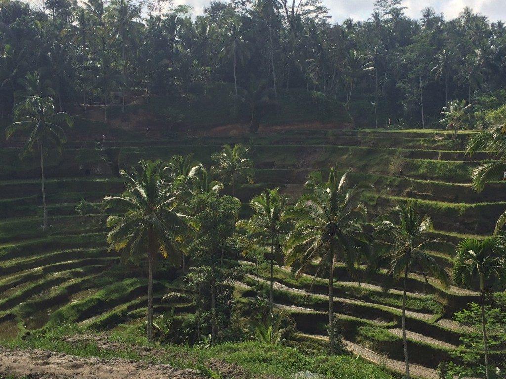 Risterrasser Bali