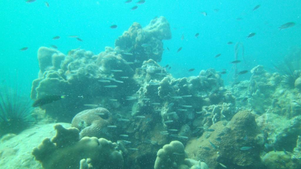 Dykning Koh Kood Thailand