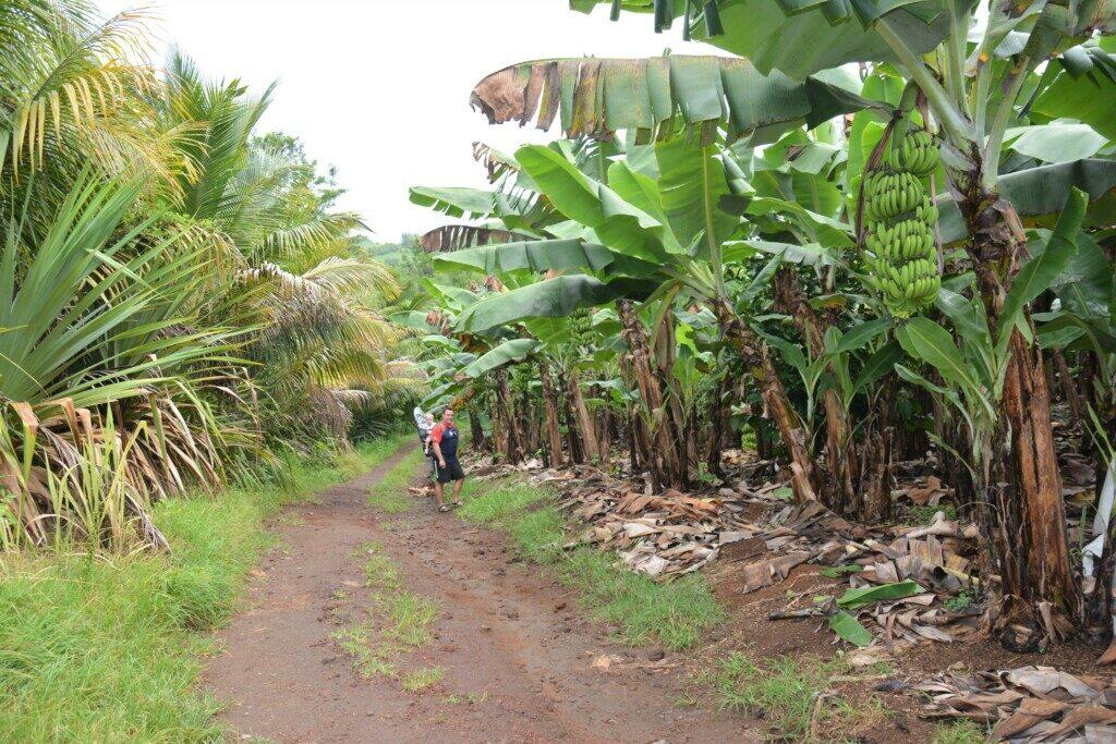 Oplevelser på Reunion