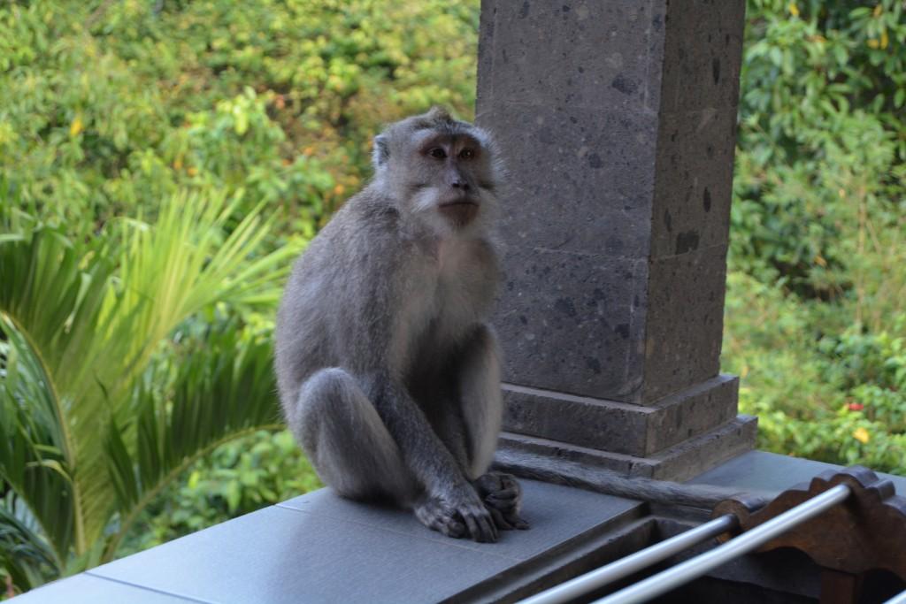 Hotel ved Monkey forrest Bali