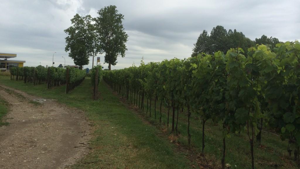 Vinmarker Italien