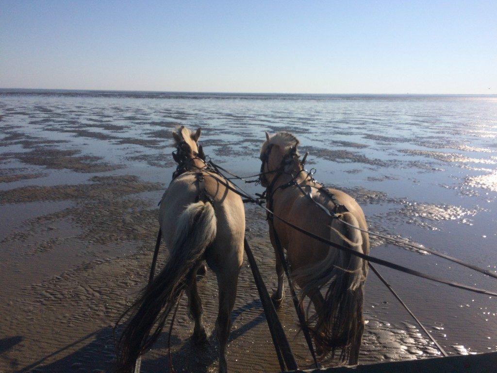 Østerssafari Vadehavet