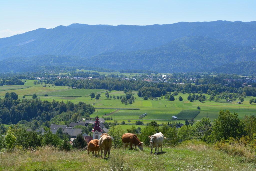 Slovenien natur