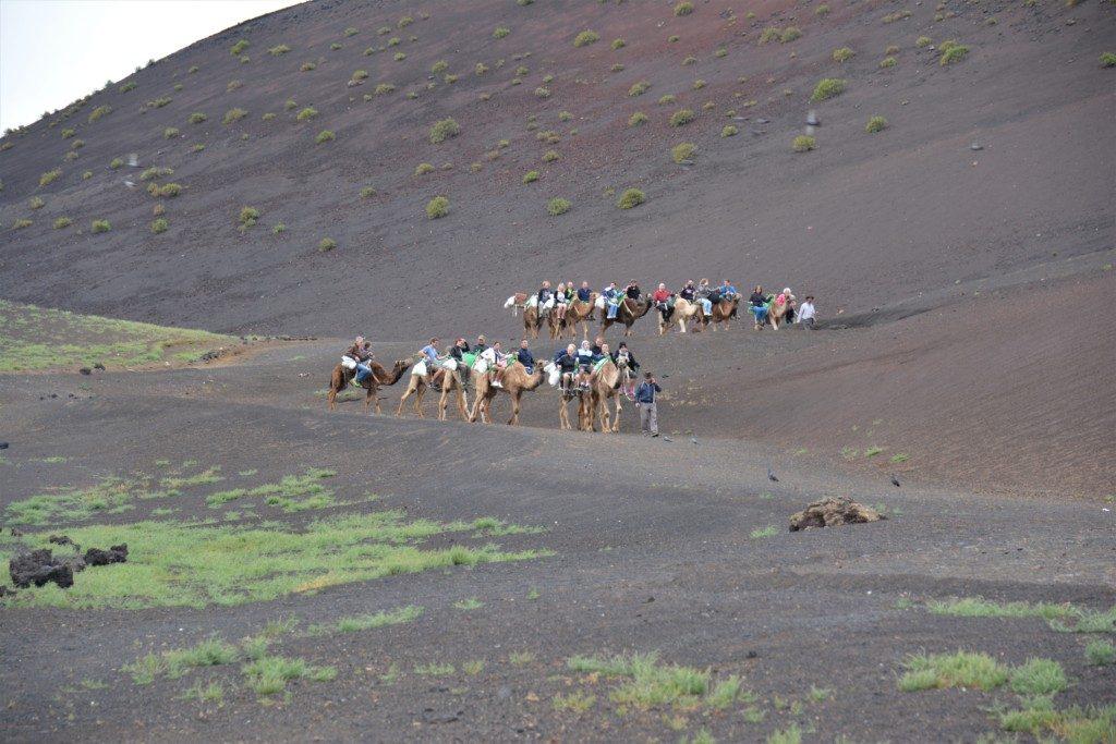 Kamelridning Lanzarote